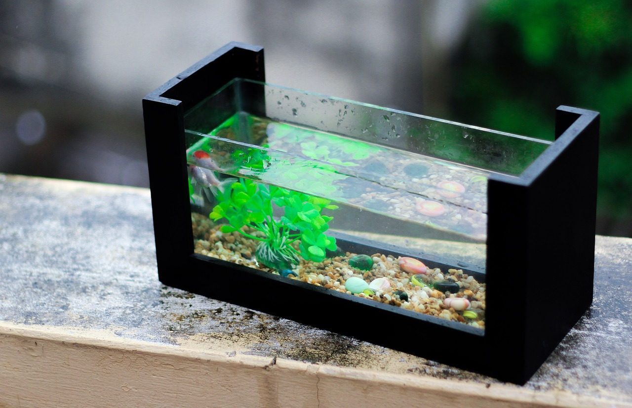 Outdoor-Aquarien